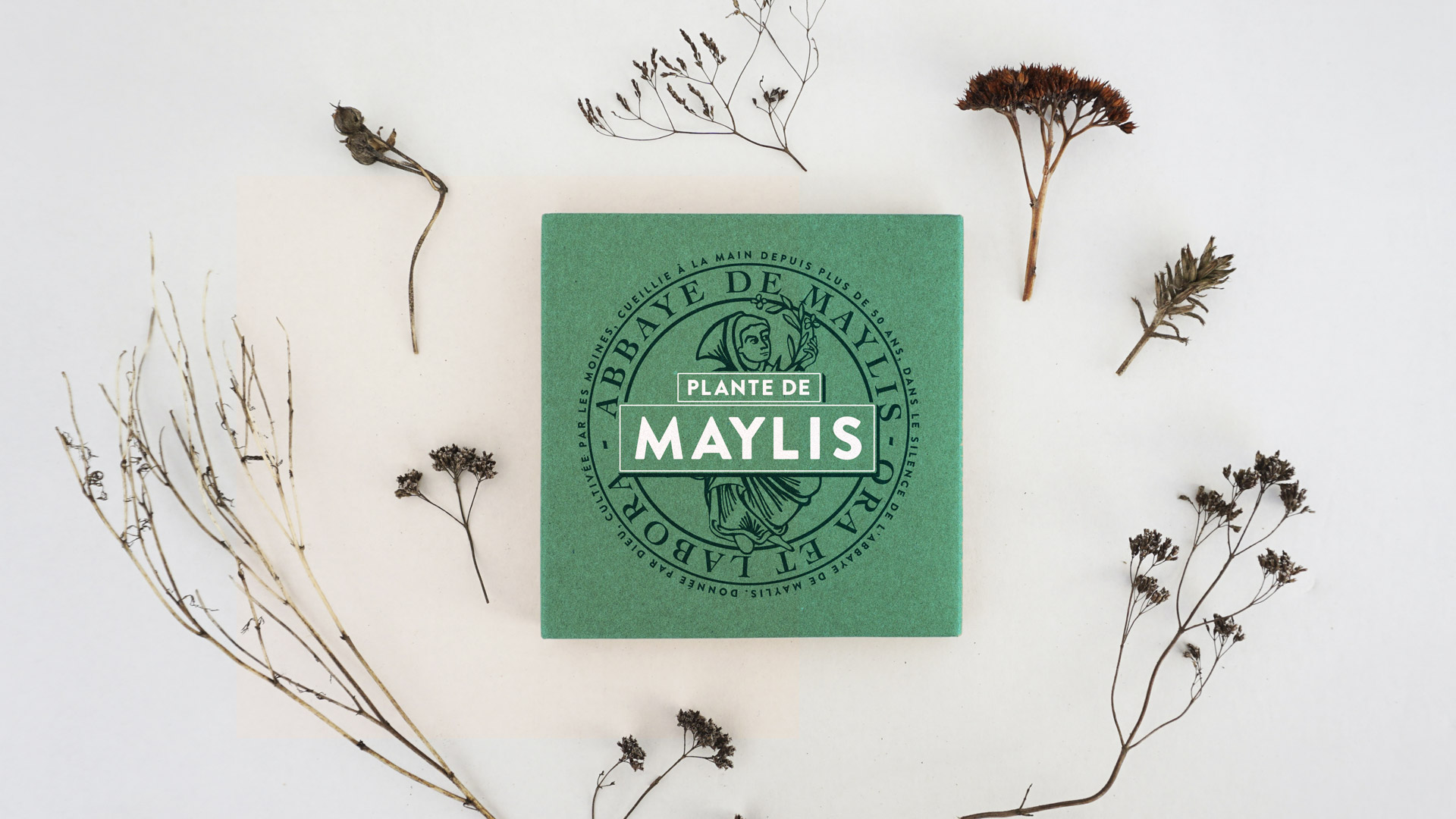 Plante de Maylis